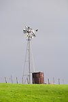 Aermotor windmill with collapsed windwheel, winter, with hawks sitting and landing on the windmill, Stanislaus Co., Calif.