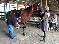 "Nathan Slaven (right) of Independence, Ore., inspects, Tee Time, a Tennessee Walking Horse under the watchful gaze of the horse's owner Sue Williams of McCleary, Wash., at the Northwest Walking Horse Classic in Spanaway, Wash., on July 11, 2015. Slaven is a ""designated qualified person (DQP) certified by the USDA to check for soring, an illegal practice that involves burning a horses skin with chemicals. The horse passed his inspection. (© Karen Ducey Photography)"