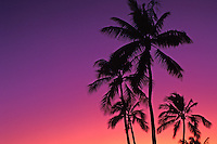 Gorgeous vivid purple and pink Hawaiian sunset with silhouetted  palm trees.