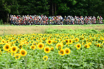 The peloton pass some sunflowers during Stage 10 of the 104th edition of the Tour de France 2017, running 178km from Perigueux to Bergerac, France. 11th July 2017.<br /> Picture: ASO/Alex Broadway | Cyclefile<br /> <br /> <br /> All photos usage must carry mandatory copyright credit (&copy; Cyclefile | ASO/Alex Broadway)
