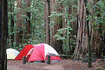 Campground with tents at Butano State Park