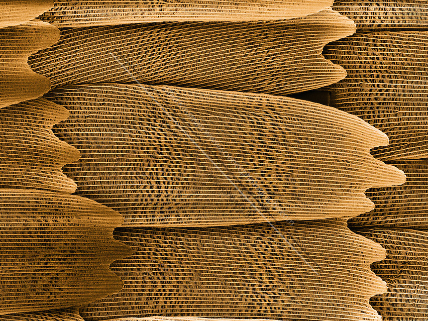 .Monarch Butterfly scales (Danaus plexippus)  Colored Scanning Electron Micrograph (SEM) of scales from the wing.  Magnification is 400 x and represents a field of view of .2 mm.