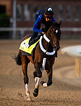LOUISVILLE, KENTUCKY - MAY 01: Tax prepares for the Kentucky Derby at Churchill Downs in Louisville, Kentucky on May 01, 2019. Evers/Eclipse Sportswire/CSM