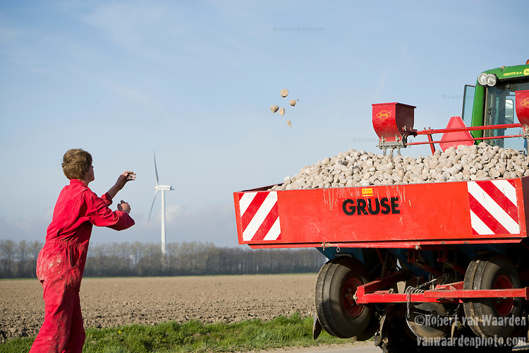 Maarten de Clerck throws potatos back in the tractor during an afternoon on the farm in Swifterbant, the Netherlands. The de Clerck family has been farming wind energy for over a decade. Together the two brothers, Stephan and Ralph are producing over 8MW of wind energy and selling it to the grid. The wind energy is an important crop that allows them to diversify their product. They continue to farm their land, planting potatoes and the wind mills run in the background.