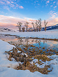 Yellowstone National Park, WY: Cottonwood trees on the Lamar River reflecting at sunset
