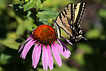 Misc. garden shots in Gardnerville, Nev., on Friday, July 7, 2017. <br /> Photo by Cathleen Allison/Nevada Photo Source