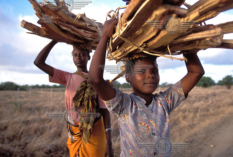 ©Caroline Penn/Panos Pictures..Kenya, Kilifi. collecting fire wood.