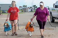 NWA Democrat-Gazette/DAVID GOTTSCHALK Mikenley Travis (left), 15, of Pea Ridge Future Farmers of America and the Apple Spur 4-H club, and her mother Frances Travis walk Tuesday, August 7, 2018, Jolene (left) and Fancy, market and commercial goats, at the 2018 Benton County Fair in Bentonville. The 2018 Benton County Fair runs through Saturday, August 11, and features amusement rides, arts displays, a horse show, goat yoga and other exhibits and activities.