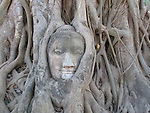 Stone Buddha being strangled by tree roots, Ayattahya, Thailand