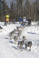 Rodney Whaley Anchorage Start Iditarod 2008.