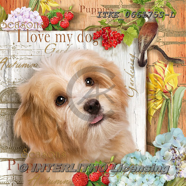 Isabella, REALISTIC ANIMALS, REALISTISCHE TIERE, ANIMALES REALISTICOS, paintings+++++,ITKE066175S-L,#a#, EVERYDAY ,dogs ,collage