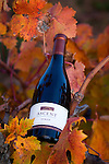 Easton/Terre Rouge Winery..Autumn grapes