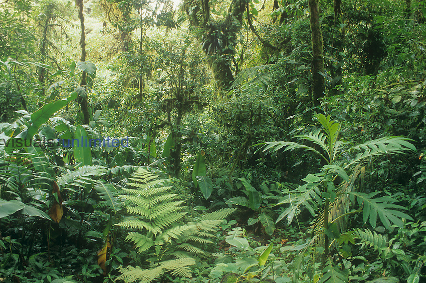Cloud Forest, Monteverde, Costa Rica.