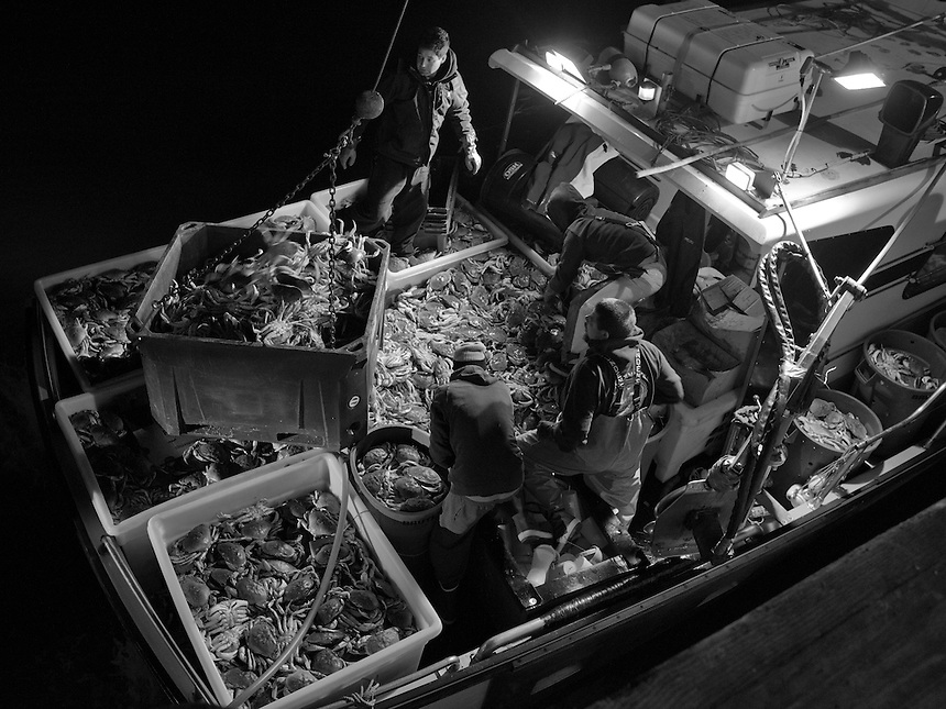 The crew of fishing boat Hog Heaven, clockwise from top, captain Sean Hodges, Eric Sandquist, Michael Rossino, and Tony Largo, unload their first dungeness crab catch of the season at Pier 45 in San Francisco, California, in the early morning hours of Sunday, November 16, 2014.