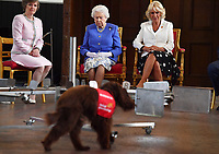 Royals at 10th Anniversary of Medical Detection Dogs