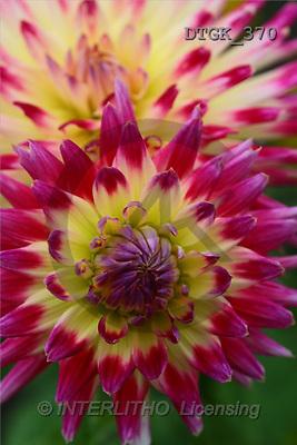Gisela, FLOWERS, photos(DTGK370,#F#) Blumen, flores, retrato