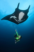 QT1862-D. Manta Ray (Manta birostris) interacts with scuba diver (model released). Baja, Mexico, Pacific Ocean.<br /> Photo Copyright &copy; Brandon Cole. All rights reserved worldwide.  www.brandoncole.com