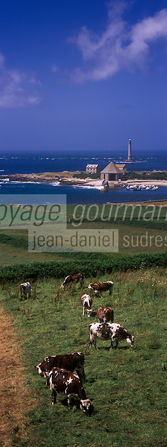 Europe/France/Normandie/Basse-Normandie/50/Manche/Presqu'île de la Hague/Goury: le phare du Cap de la Hague  et vaches normandes en paturage