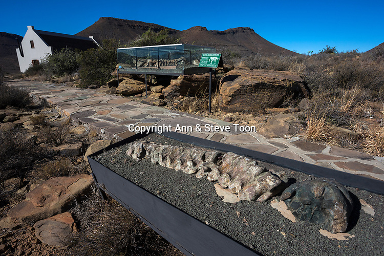 Fossil trail, with reproduction Bradysaurus skeleton, Karoo national park rest camp, Western Cape, South Africa, September 2017