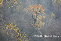 65045-01115 Trees in fall, Ozark National Scenic Riverway near Akers Ferry, MO