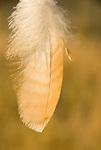 Hanging bird feather