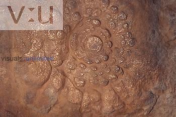 Ediacaran Fossil-Precambrian (Tribranchidium heraldicum) 600 M.Y.A. First multi-celled animals.