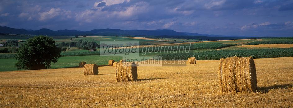 Europe/France/Alsace/67/Bas-Rhin/Env d'Ernolsheim Les Saverne/Parc régional des Vosges du Nord : Aprés la moisson rouleaux de paille