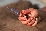 Bloody knife and hand from an Indian butchering a buffalo for food