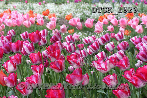 Gisela, FLOWERS, photos+++++,DTGK1929,#f#