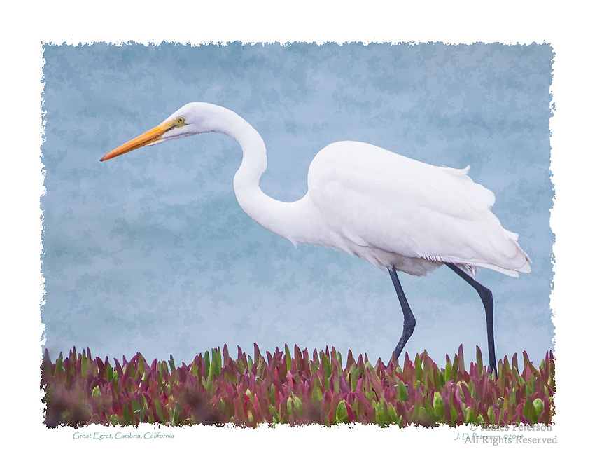 Great Egret, Cambria, California