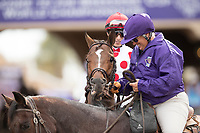 DEL MAR, CA - NOVEMBER 03: Awesome Slew #5, ridden by John Velazquez, greets a women before the start of the Breeders' Cup Las Vegas Dirt Mile on Day 1 of the 2017 Breeders' Cup World Championships at Del Mar Thoroughbred Club on November 3, 2017 in Del Mar, California. (Photo by Alex Evers/Eclipse Sportswire/Breeders Cup)