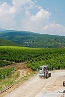Vineyard. Kir-Yianni Winery, Yianakohori, Naoussa, Macedonia, Greece