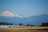 Canadian Forces Snowbirds preparing for Takeoff, Abbotsford International Airshow, BC, British Columbia, Canada - Mt Baker, USA in distance