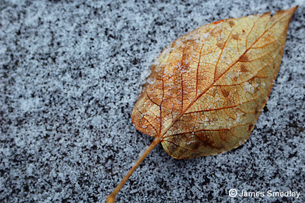 Leaf on granite rock