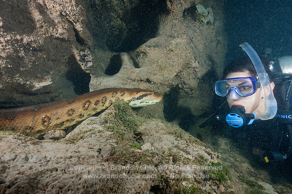 RB7264-D. Green Anaconda (Eunectes murinus), huge 7m (22 feet) long female snake underwater faces off with brave scuba diver (model released). Brazil, South America.<br /> Photo Copyright &copy; Brandon Cole. All rights reserved worldwide.  www.brandoncole.com