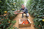 Khaled Abu Khater harvests tomatoes in a greenhouse in Al Fukari, Gaza. He grows vegetables in several greenhouses, using water from a rain water catchment system to fill a giant pond. That water he mixes with increasingly saline groundwater from a well. The system allows him to produce a greater quantity of more lucrative crops, at greater profit because he has to buy less water. Khater and several other farmers in the community received assistance in building the system from Diakonie Katastrophenhilfe, a member of the ACT Alliance. In the wake of the devastating 2014 war, ACT Alliance members are supporting health care, vocational training, rehabilitation of housing and water systems, psycho-social care, and other humanitarian actions throughout the besieged Palestinian territory. Quality water is growing increasingly scarce in Gaza, as Israel drains the aquifer for its own development, pulling salt water into the aquifer from the west.