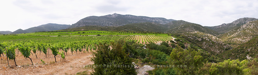 Domaine des Grecaux in St Jean de Fos. Montpeyroux. Languedoc. Garrigue undergrowth vegetation with bushes and herbs. France. Europe. Vineyard. Mont Saint Baudille.