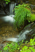 Small stream along the Perseverance Trail-Tongass National Forest-Alaska, USA