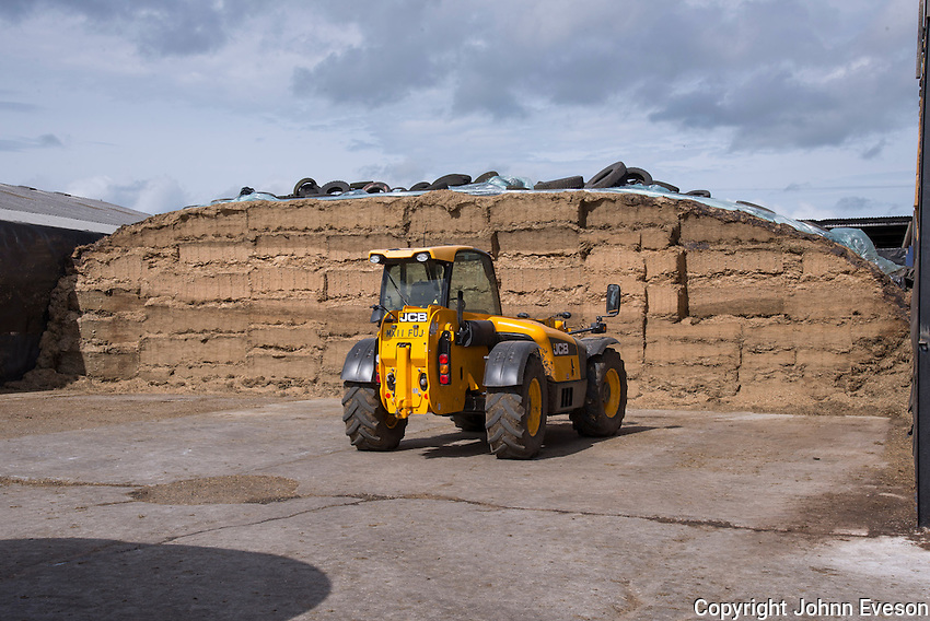 The maize silage clamp.