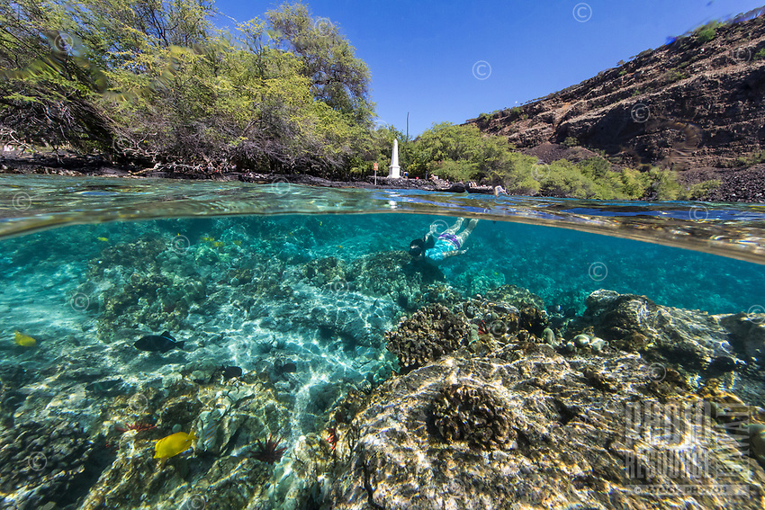 A woman snorkels with tropical fish along the reef near the Captain Cook monument, Kealakekua Bay, Big Island.