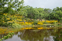 Wildflowers in Texas Hill Country