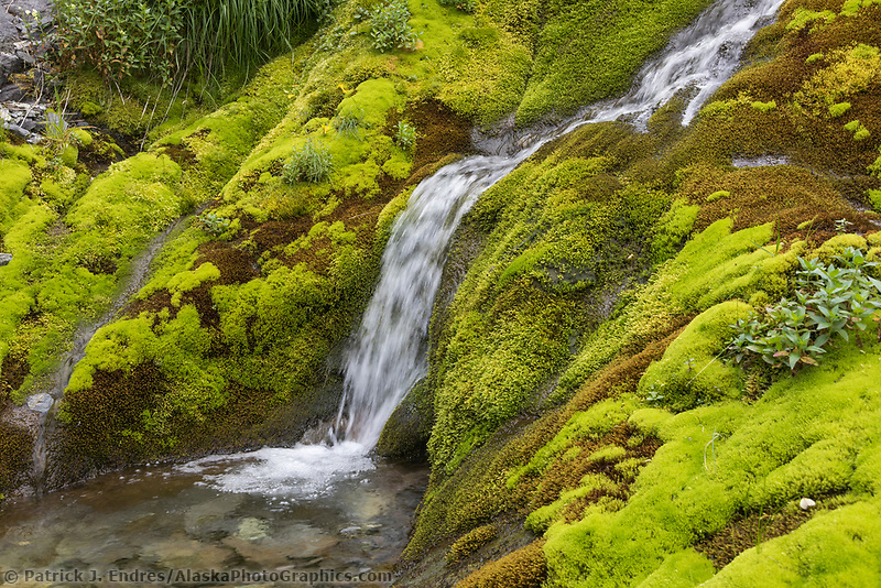Lush green moss and vegetation surround a cascading stream on UnAlaska Island, Dutch Harbor, Alaska.