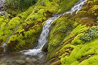 Lush green moss in a mountain stream on Unalaska island, Dutch Harbor, Aleutian Islands, Alaska