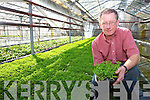A Sea of Green 'Fit for Presidents', Pat Everett from Skellig Seaside Nursery with some of the shamrock destined to travel all over the world.