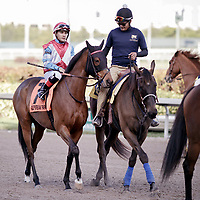 HALLANDALE BEACH, FL - JAN 13: Ultra Brat #7 with Nik Juarez in the irons prior winning the $150,000 Marshua's River Stakes for trainer H. Graham Motion at Gulfstream Park on January 13, 2018 in Hallandale Beach, Florida. (Photo by Bob Aaron/Eclipse Sportswire/Getty Images)