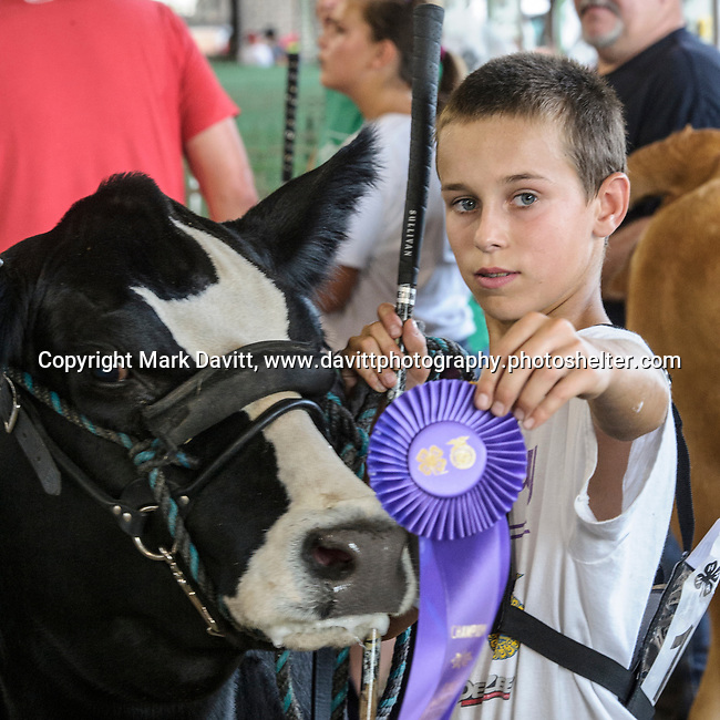 Cody Hay of Bondurant proudly shows off his first place ribbon after showing his calf in the senior yearling heifer foundation seminal division at the Polk County Fair July 21.