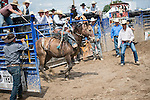 The rodeo may begin as the bronco - or wild horse -  is set free.