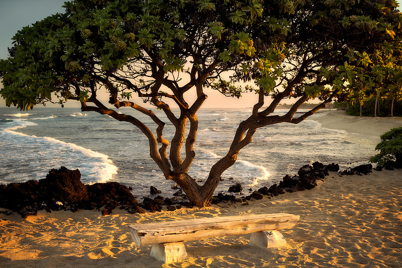 Heliotope trees and bench at ocean side. Hawaii, The Big Island.