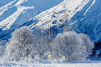 Winter landscape of hoarfrost covered trees in Turnagain Pass area with Kenai Mountains in background in Southcentral, Alaska.  <br /> <br /> <br /> <br /> Photo by Jeff Schultz/SchultzPhoto.com  (C) 2017  ALL RIGHTS RESVERVED