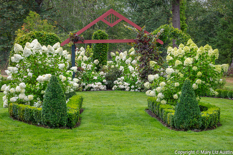 Vashon Island, WA: Boxwood and  hydrangeas under colorful pergola in Froggsong garden in summer